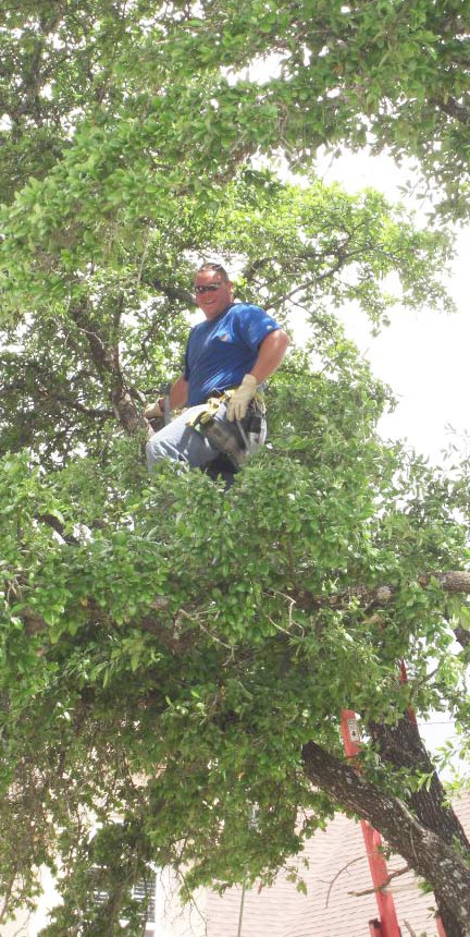 Pruning large tree in Bee Caves Texas